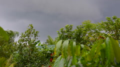 Dark clouds coming over the sky from Typhoon hagupit, Ruby in Philippines, Stock Footage