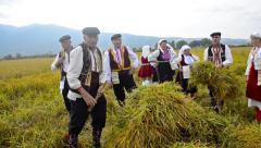 Rice manual harvesting manifestation - stock footage