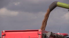 Thresher unloads wheat grain on farmland field background Stock Footage