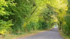 Maple tree avenue in autumn Stock Footage