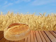 Warm crunchy bread on wooden surface against of ripe wheat. Stock Photos