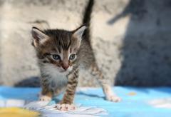Little homeless kitten - stock photo