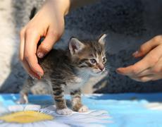 Little homeless kitten in the hands Stock Photos