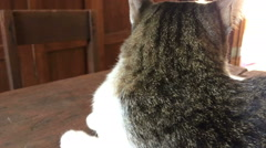 Dolly Shot With Cat Relaxing On Wooden Table - stock footage