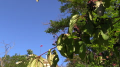 Sunny autumn day in Sevastopol. Crimea, Fall 2014. Stock Footage