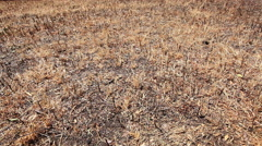 Drought dry dead grass lawn slide lf Stock Footage