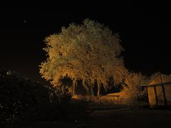 Oak tree covered in snow at night Stock Photos