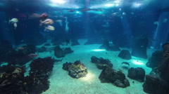 Fishes in Lisbon Oceanarium, Portugal timelapse - stock footage