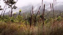 Costa Rica mountain mists Stock Footage