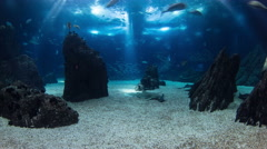 Fishes in Lisbon Oceanarium with rocks, Portugal timelapse Stock Footage