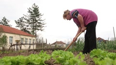 Garden Hoe In Rural Households, Organic Food, Low Angle Shot - stock footage