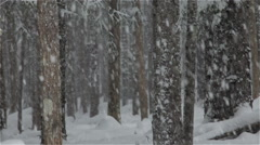 Heavy Snow Falls into Deep Forest Beauty Stock Footage