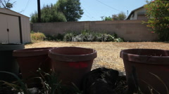 Drought empty pots slide right pt2 Stock Footage