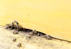Honey bees in yellow beehive - stock photo