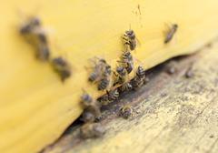 Honey bees in yellow beehive Stock Photos