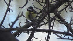 River, tit on a branch Stock Footage