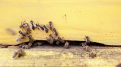 Honey bees in yellow beehive - stock footage