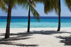 Beautiful Deserted Tropical Palm Beach In Maldives Stock Photos