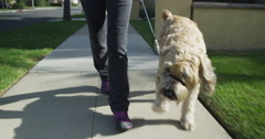 Senior woman walking wheaten terrier dog with cast Stock Footage