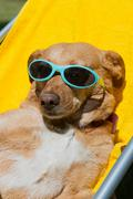 Dog taking sun bath - stock photo