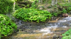 Green plants near sream in the forest Stock Footage