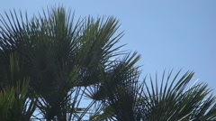 Palm tree fronds wind palmetto Stock Footage
