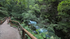 Timelapse - Lush greenery in a forest with river and a walkway for hikers Stock Footage