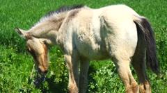Free foal in the field, wild (4K) - stock footage