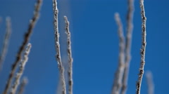 Morning hoarfrost on branches. Stock Footage