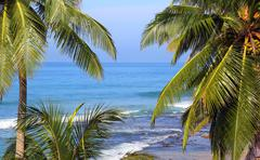 sea landscape with palm leaves on foreground - stock photo