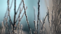 Morning hoarfrost on branches. - stock footage