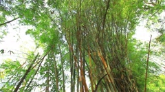 Leaves of bamboo and bamboo forests. Stock Footage