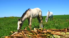 Mare with her foal in the field, sunny day (4K) Stock Footage