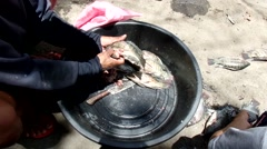 Removing intestines of Tilapia Fish Stock Footage