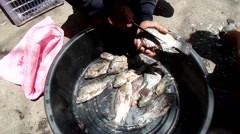 Manual Dressing of Tilapia Fish Stock Footage