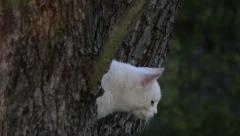 White Cat on Tree Stock Footage