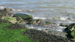 Seaweed on rocks - stock footage
