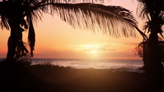 Sunset at beach with direct sun and palm trees Stock Footage