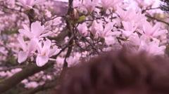Japanese Garden Vienna - spring blossom 3 Stock Footage