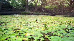 Pond with water lillies at Trou d'eau Douce Stock Footage