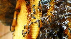 Working bees on honeycomb (4K) Stock Footage