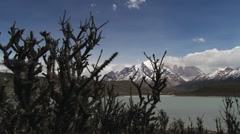 Plants waved by the wind in the Torres del Paine National park, Chile. Stock Footage