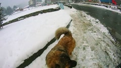 Dog runs on the road Stock Footage