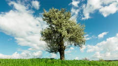 4K Spring/summer landscape tree on meadow sky and clouds timelapse - stock footage