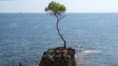Pine forest tree by the sea Stock Footage
