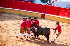 Forcados perfoming a portuguese style bullfight - stock photo