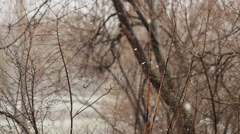 Snow Falling On Background Of Tree Stock Footage