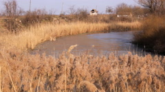 Reeds and swamp lake 2 Stock Footage