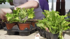 Potting plants in greenhouse Stock Footage