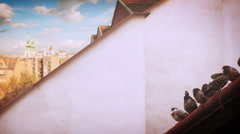 Pigeons on one of the roofs of Hungarian capital Budapest Stock Footage